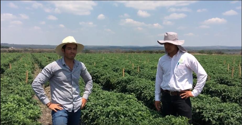 Testimonial de chiles en León «Serviagro»