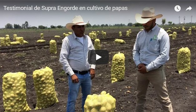 Testimonial de Supra Engorde en cultivo de papas
